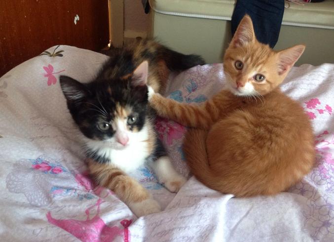 Мальчики коты