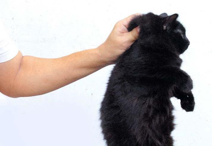 Кота держат за шкирку