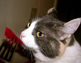 Свекла кошкам — можно ли ее давать?