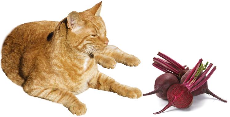 Кошка и свекла