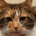 Нефроз почек у кошек: симптомы, диагностика и лечение