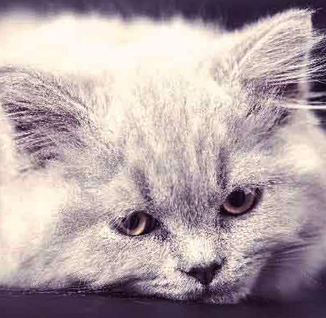 У кошки плохой аппетит