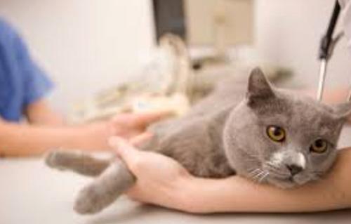 Диагностика кота