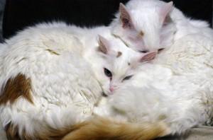Кошки греются