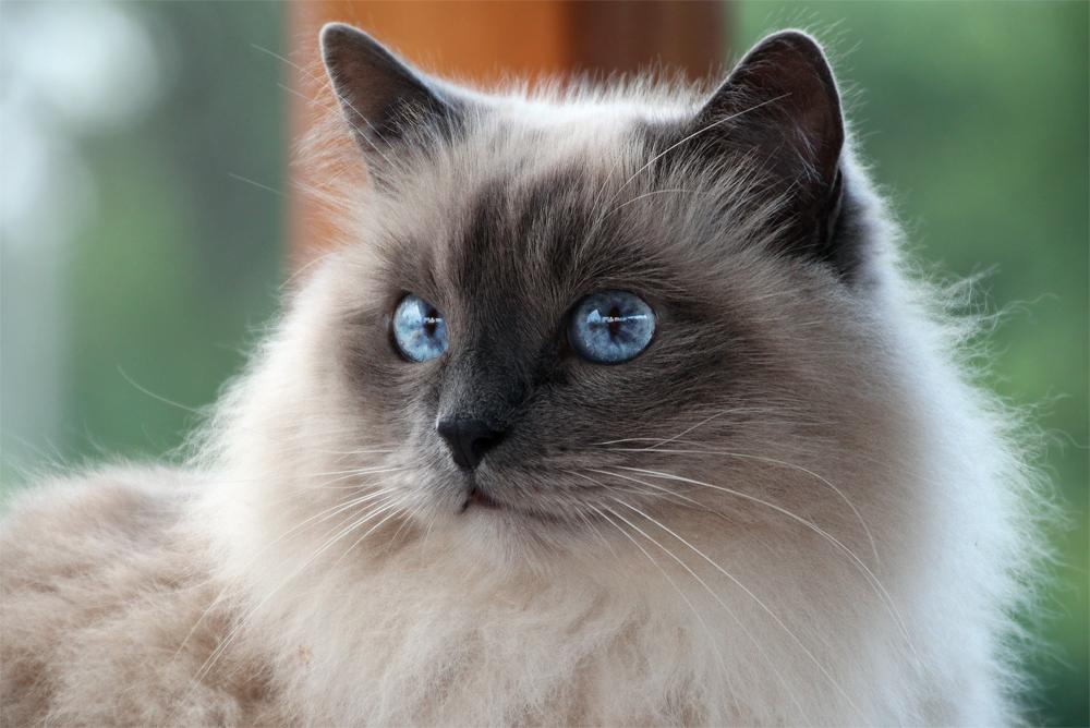 Глаз красивое фото