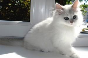 Котенок на подоконнике