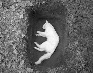 Захоронение кошки