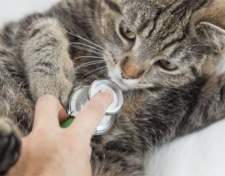 Болезнь кошки