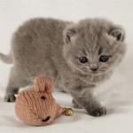 Как ухаживать за вислоухими котятами