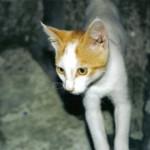 Что делать если кошка сильно похудела