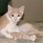 Запах кошачьей мочи: откуда он берется и чем его убрать