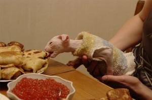 Украинский левкой кушает блины