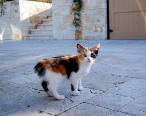 Котенок на улице
