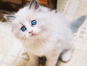 Грустный котенок