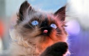 Смешной котенок