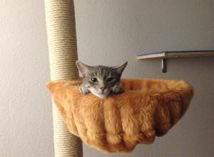 Уставший котенок