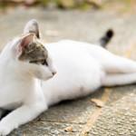 Течка у кошек: что делать и как успокоить животное
