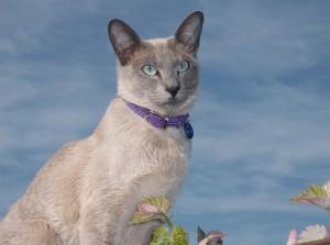 Ухоженный кот