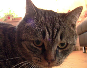 Можно ли кошкам давать валерьянку