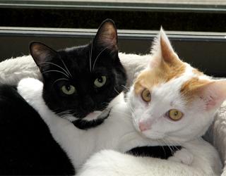 Дружба двух кошек