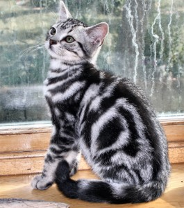 Кошка позирует