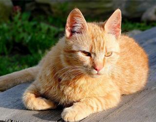 Кошка на природе