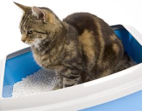 Как выбрать наполнитель для кошачьих туалетов