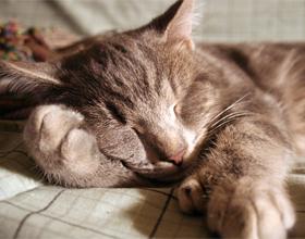 Как понять, что кошка заболела?