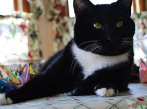 Бело-черный кот