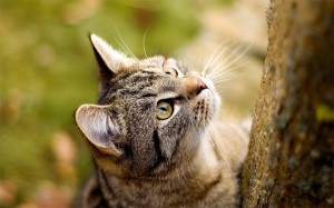Хочет на дерево