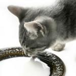Чем кормить котенка — советы и рекомендации