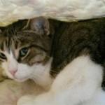 Что делать если кошка боится чужих людей