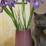 Что делать если кошка ест цветы