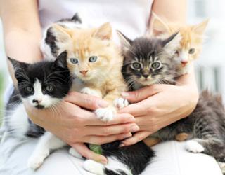 Кошачья няня