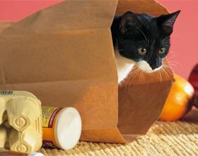 Кошки любят коробки и пакеты
