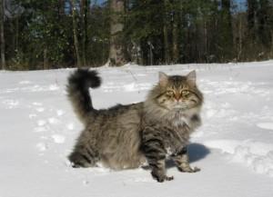 Вольный кот