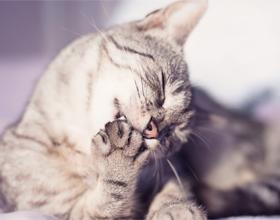Кошки часто умываются