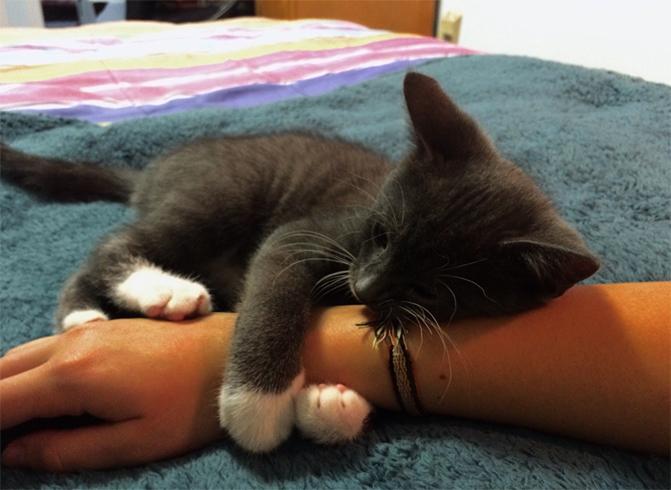 Приучение котенка