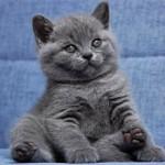 Какую породу кошек выбрать для проживания в квартире