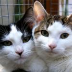 Кого выбрать кота или кошку?