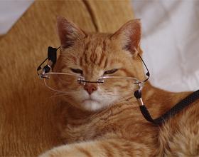Если кошка стареет