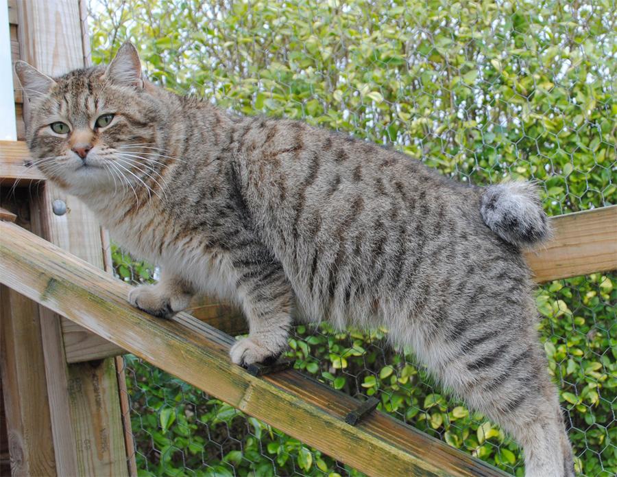 Картинка кошки на шашлыках природе