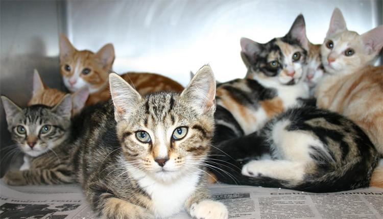 Разведенные кошки