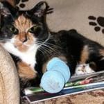 Если кот сломал лапу: причины, первая помощь, что делать