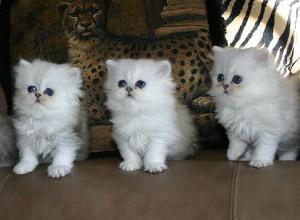 3 брата