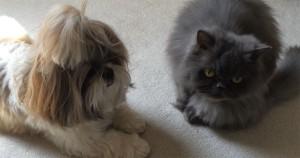 Перс с собачкой