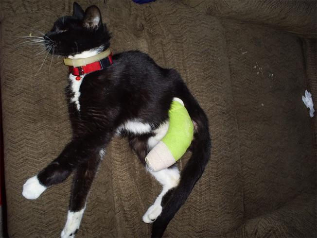 Кошка со сломанной лапой