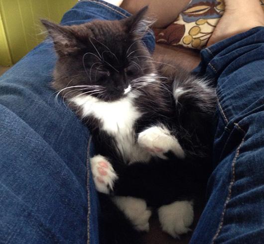 Котенок спит между ногами