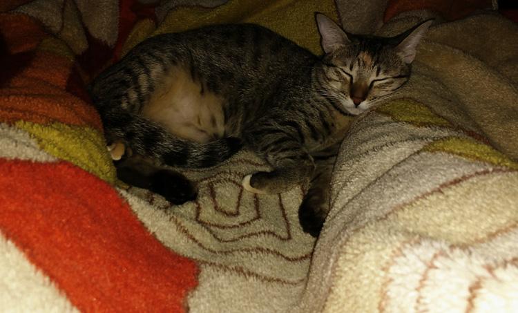 Взрослый кот спит в ногах