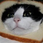 Хлеб кошкам: можно ли давать, польза и вред